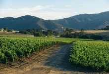 Lompoc City Council Opts Out of Wine BID