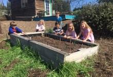 Santa Ynez Valley Charter School Grows Green Thumbs
