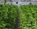 Cannabis Taxes Bring Twice as Much Revenue as This Time Last Year