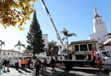 Downtown Santa Barbara Raises 45-Foot Christmas Tree on State Street