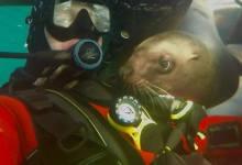 Search Continues for Diver Missing off Santa Cruz Island