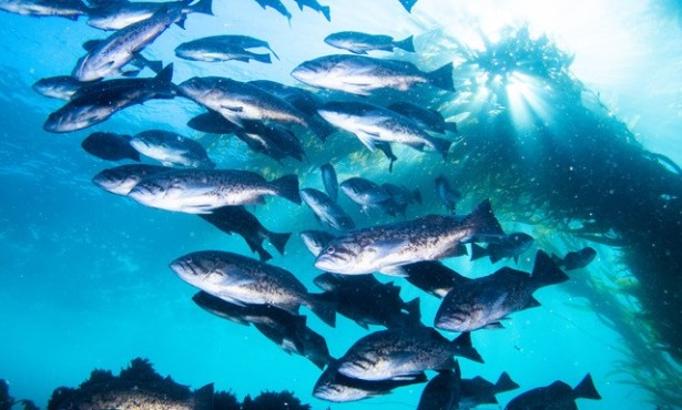 Nearly No Poaching in Channel Islands Marine Protected Areas