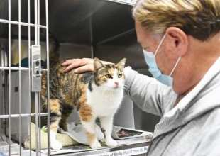 Cat Reunited with Owner Three Years After Montecito Debris Flow
