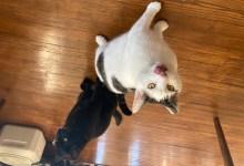 Meet Our Feline Friends Mooshi & Pixel
