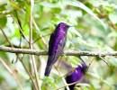 Birding Colombia with Santa Barbara Audubon