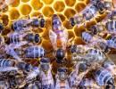 Online: Beginning Beekeeping Class