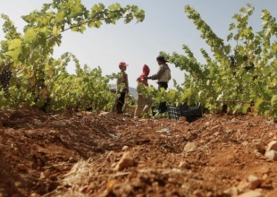 The Historic Pairing of 'Wine & War'