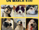 Bring your Dog to Coastal Day!