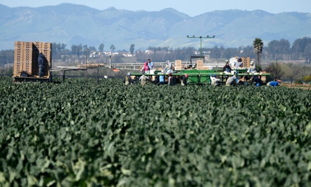 Farmworker Vaccine Pilot a Success