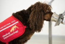 Can Dogs Sniff COVID-19?