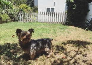 Santa Barbara's Pets & Animals: From Fur Babies to Working Stiffs