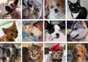 Santa Barbara's Pandemic Pets