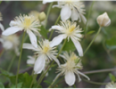 Online Event: Spring Blooms with Sally Isaacson