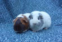 Brigatta and Mochi