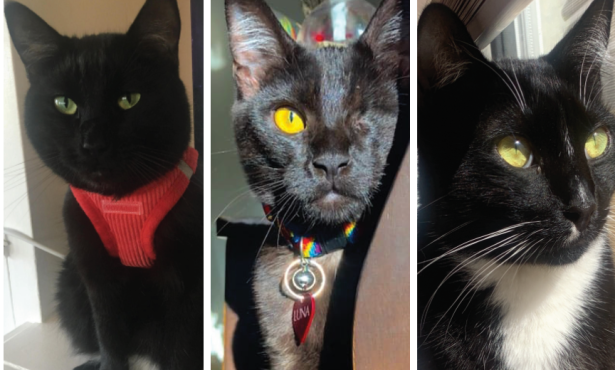 The Black Cat Club