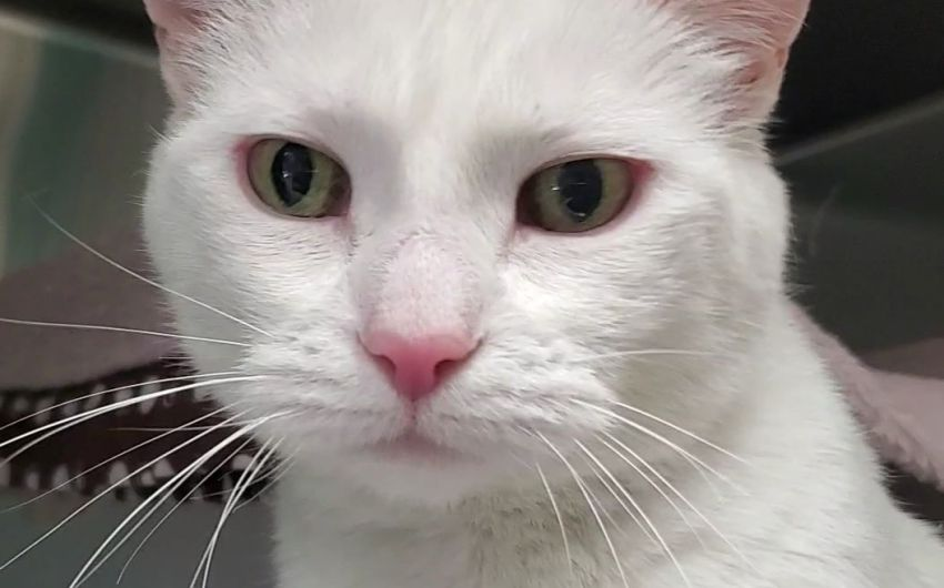 Adoptable Pet of the Week: Myrrh