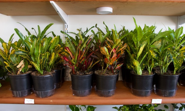 Idyll Mercantile: Where Plants Meet Their People