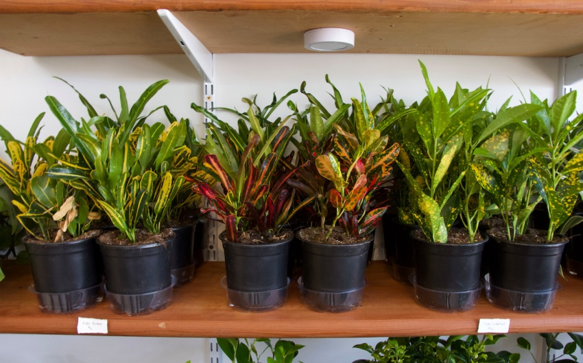 Idyll Mercantile: Where Plants Meet Their People