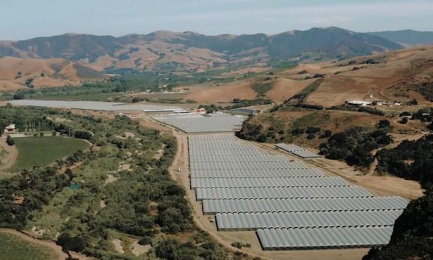 'Santa Barbara Weed Country'