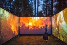 Immersive 'Walk Into Wildfire' Exhibit Opens Saturday