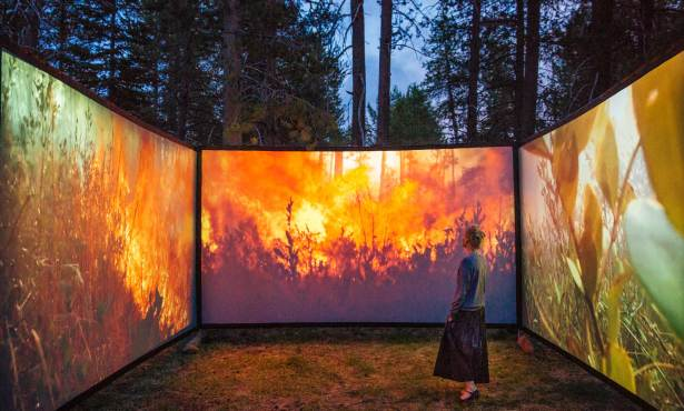 Immersive 'Walk Into Wildfire' Exhibit Opens Saturday