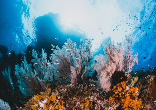 The Overlooked Heroes of Coral Reefs