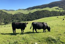 Jalama Canyon Ranch to Become Regenerative Farming Center
