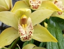Curated: Orchids and Their Care on Zoom