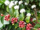 Coffee Tasting and Tour of Good Land Organics Farm