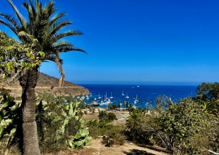 Happily Whisked Away to Catalina Island