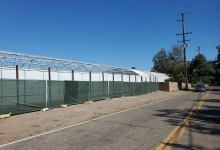 Cannabis: County Files Suit, License Surrendered, Plants Pulled