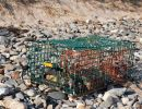 Watershed Brigade Lobster Trap Cleanup Event
