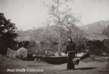 Could Four Old Sycamores Save Mission Canyon Bridge?