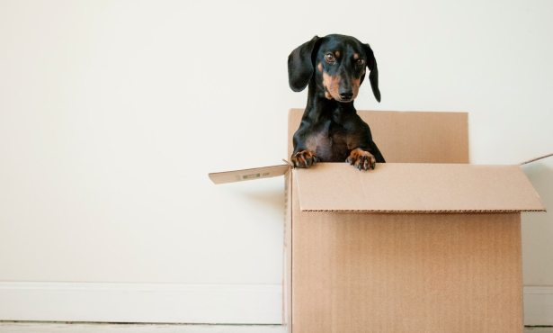 Downsizing with a Plan