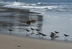 Beach Walk: Low Tide, High Ratings!