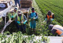 Second-Ever Santa Barbara County Farm Day