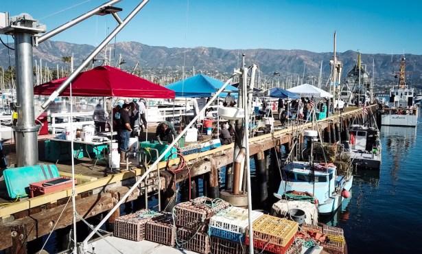 Lobster Season Leads to Santa Barbara Lobster Fest