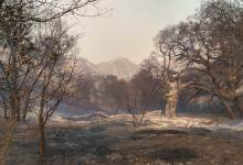 Alisal Fire Sunday Morning: 78 Percent Contained, 17,253 Acres Burned